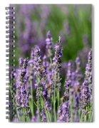 Honeybees On Lavender Flowers Spiral Notebook