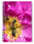 Honeybees On Pink Rose Spiral Notebook
