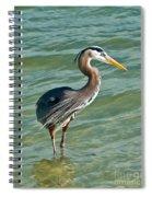 Honeymoon Island Heron Spiral Notebook