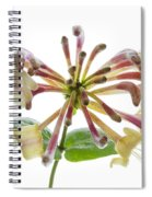 Honeysuckle Spiral Notebook