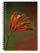 Honeysuckle Blooms Unopened 1 Spiral Notebook