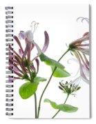 Honeysuckle Blossom Spiral Notebook