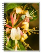 Honeysuckle Spiral Notebook