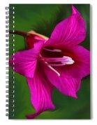 Hong Kong Orchid Spiral Notebook