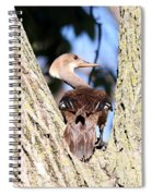 Hooded Merganser Duck Spiral Notebook