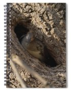 Hooded Merganser In The Knot Hole  Spiral Notebook