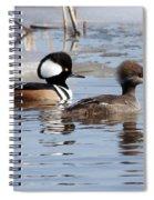 Hooded Merganser Pair Spiral Notebook