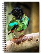 Hooded Pitta Spiral Notebook
