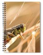 Hopper In Golden Grass Spiral Notebook