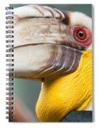 Hornbill Bird Portrait Closeup Spiral Notebook