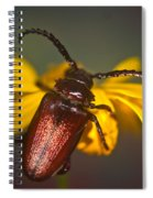 Horned Beetle Spiral Notebook