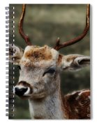 Hornes 2 Spiral Notebook