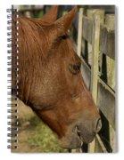 Horse 31 Spiral Notebook