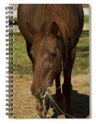 Horse 32 Spiral Notebook