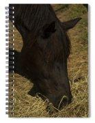 Horse 34 Spiral Notebook