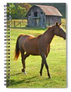 Horse And Old Barn In Etowah Spiral Notebook