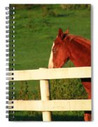 Horse And White Fence Spiral Notebook
