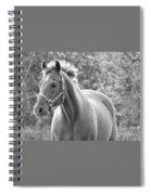 Horse Black And White Spiral Notebook