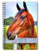 Horse Closeup Spiral Notebook