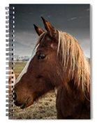 Horse Composition Spiral Notebook