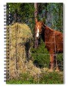 Horse Eating Hay In Eastern Texas Spiral Notebook