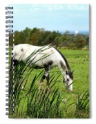 Horse Grazing In Field Spiral Notebook