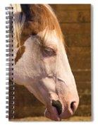 Horse Nap Spiral Notebook