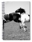 Horse Play Spiral Notebook