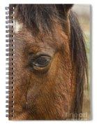 Horse Tear Spiral Notebook
