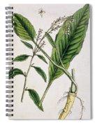 Horseradish Spiral Notebook