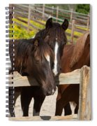 Horses Behind A Fence Spiral Notebook