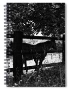 Horses By The Fence Spiral Notebook
