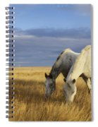 Horses Grazing In Cypress Hills Spiral Notebook
