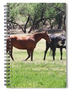 Horses Out Wickenburg Way Spiral Notebook