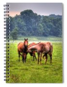 Horses Socialize Spiral Notebook