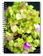 Hortensia With Touch Of Pink Spiral Notebook