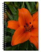 Hot Orange Lily  Spiral Notebook