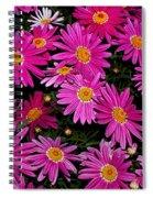 Hot Pink Daisies Spiral Notebook