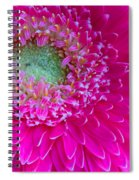 Hot Pink Gerbera Daisy Spiral Notebook