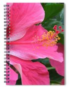 Hot Pink Hibiscus 2 Spiral Notebook