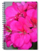 Hot Pink In February Spiral Notebook