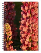 Hot Pink Lupines From My Mother's Garden Spiral Notebook