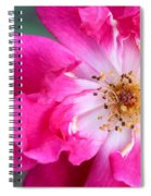 Hot Pink Rose Spiral Notebook