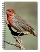 House Finch Carpodacus Mexicanus Spiral Notebook