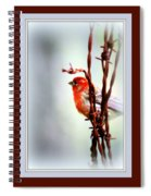 House Finch - Finch 2241-004 Spiral Notebook