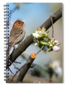 House Finch Spiral Notebook