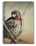 House Finch Two Spiral Notebook