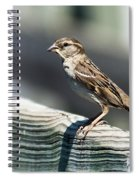 House Sparrow Spiral Notebook