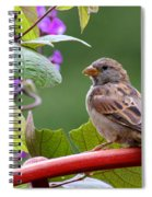 House Sparrow On A Wheel Spiral Notebook