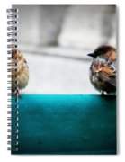 House Sparrows Spiral Notebook